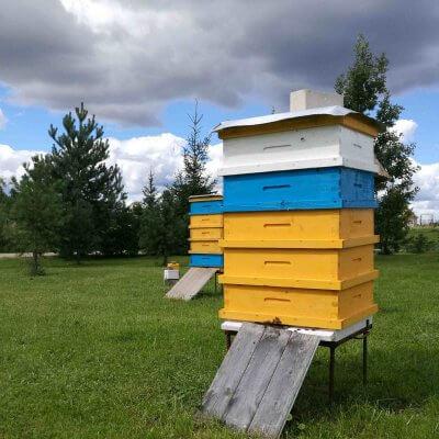 bičių aviliai