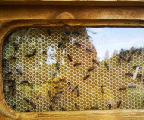 sienų apdaila bičių darbas