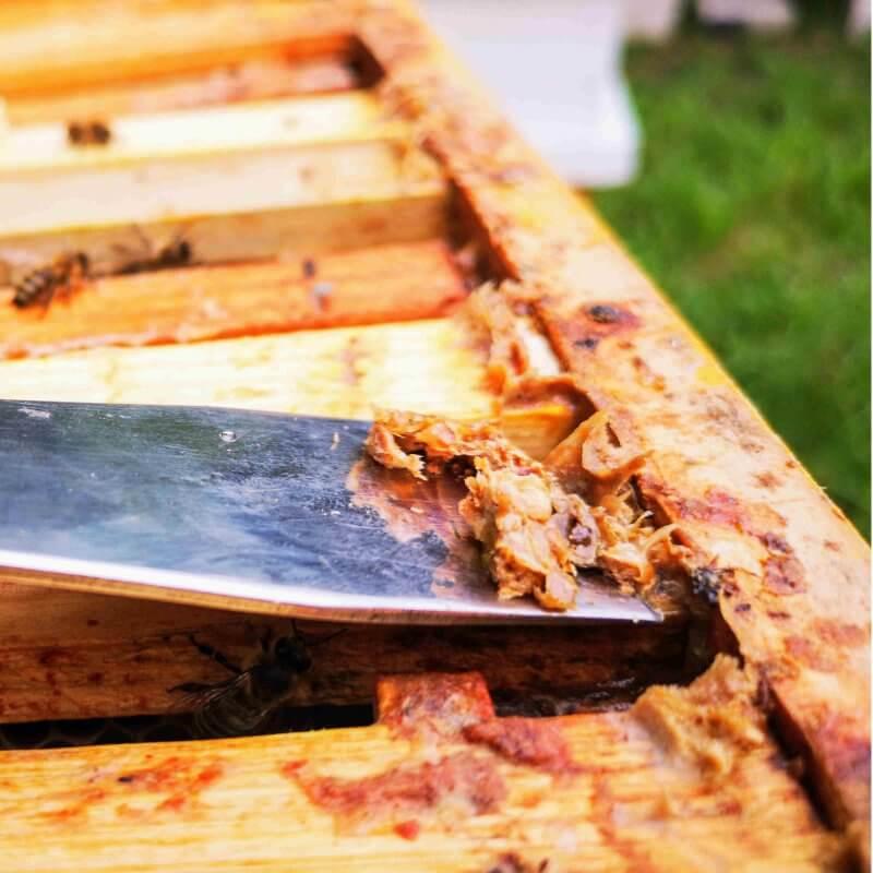 bičių pikio vartojimas
