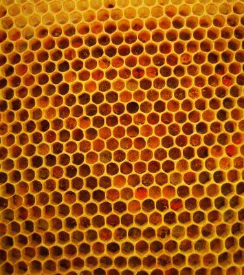 Bičių duona virstančios žiedadulkės